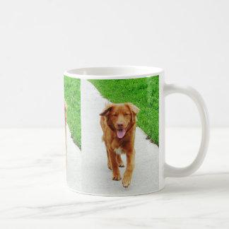 nova walking coffee mug