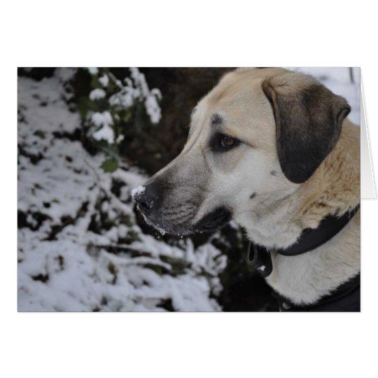 Nowzad Rescue Dog Kilo Notecard