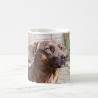 Nowzad Rscue Dog Brin Coffee Mug