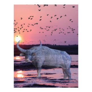 NT Buffalo Letterhead