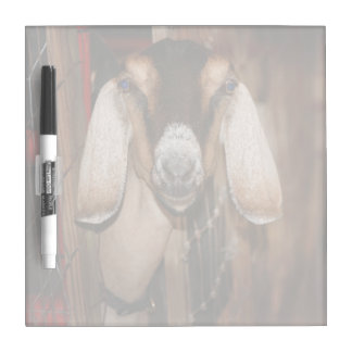 Nubian doe head on getting out of gate dry erase white board