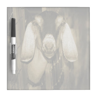 Nubian doe sepia head on getting out of gate dry erase whiteboard