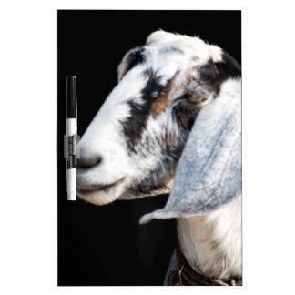 nubian goat Dry-Erase boards