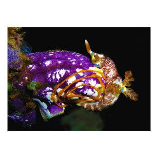 Nudibranch Laying Egg Sea Squirt Polycarpa Aurata Art Photo