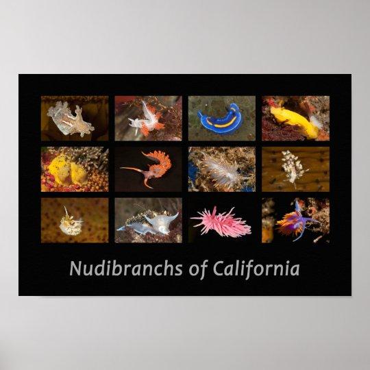 Nudibranchs of California Poster