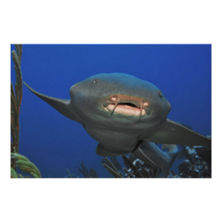 Nurse Shark Coming In Poster