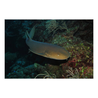 Nurse Shark on the Reef Poster