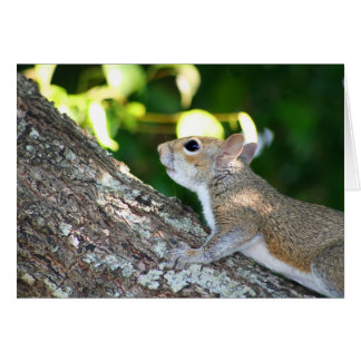 Nut Hunter card