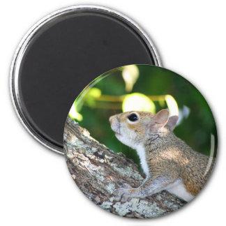 Nut Hunter magnet