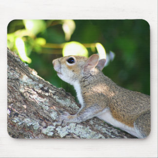 Nut Hunter mousepad