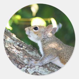 Nut Hunter sticker