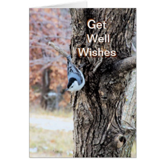 Nuthatch 7562-FV- customize any occasion Card