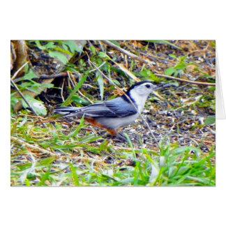 Nuthatch Bird Card