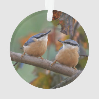 Nuthatch Collage