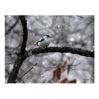 Nuthatch in the Snow Postcard