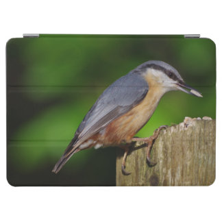 Nuthatch iPad Cover