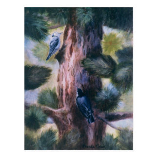 Nuthatch Love At First Sight Postcard