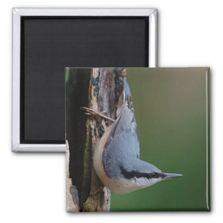 Nuthatch magnet