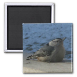 Nuthatch Square Magnet