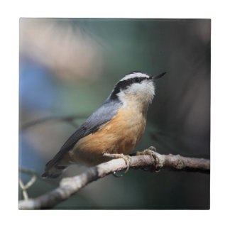 Nuthatch Tile