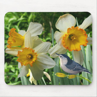 Nuthatch with Spring Daffodils - Mouse Pad