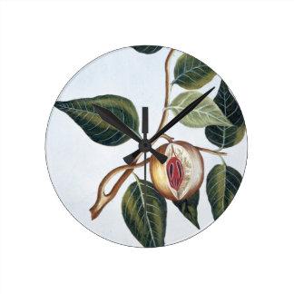 Nutmeg, plate 7, from 'Collection Precieuse et Enl Wallclock