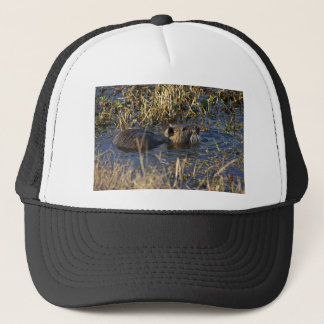 Nutria in water trucker hat