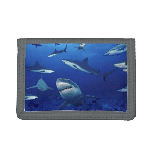 Nylon Tri-Fold Sharks Wallet