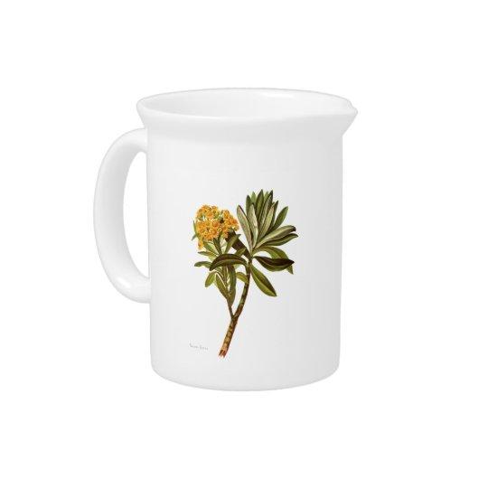 NZ Native Flowers - Senecio huntii Pitcher