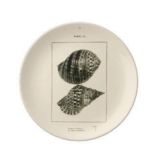 NZ Shells - Dolium variegatum, Lotorium rubicundum Porcelain Plates