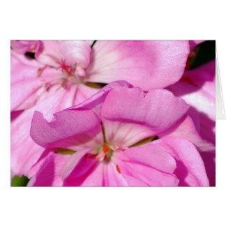 OA_hotpinkflowers_013005_1 Card