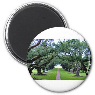 Oak Alley Magnet