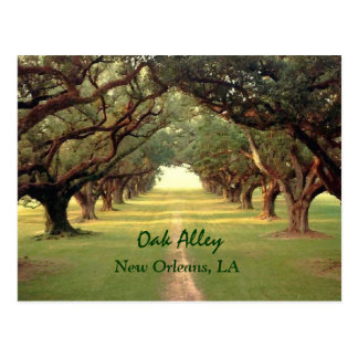 Oak Alley New Orleans Postcard