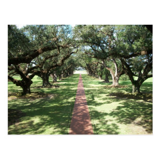 Oak Alley Plantation pathway Postcard