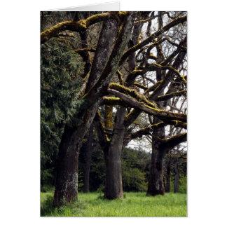 Oak Grove Card
