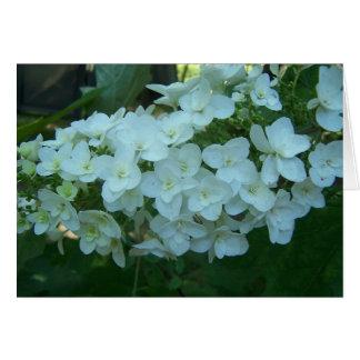 Oak Leaf Hydrangea Bloom Greeting Card