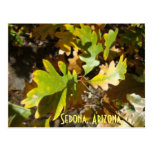 oak leaf, Sedona, Arizona Post Card