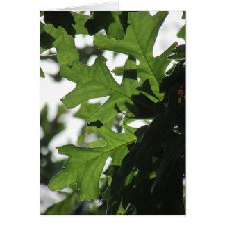 Oak Leaves Blank Card