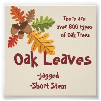 Oak Leaves Facts Photo Print