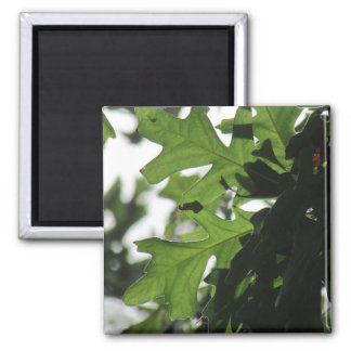 Oak Leaves Photo Magnet