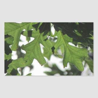 Oak Leaves Rectangle Stickers