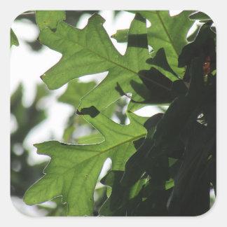 Oak Leaves Stickers