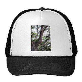 oak & mossGeorgia Live Oaks And Spanish Moss Trucker Hat