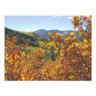 Oak Thicket Autumn Vista Photo Print