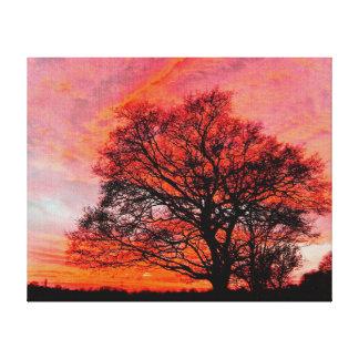 Oak tree at Sunset. Canvas Print
