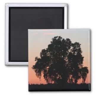 Oak Tree Silhouette at Nightfall Magnet
