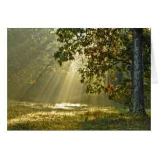 Oak Tree with Morning Sunbeams Card