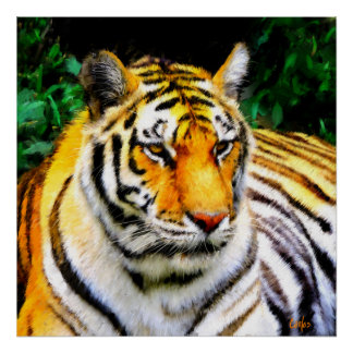 Oakland Zoo Tiger Poster