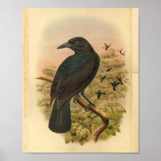 Obi Paradise Crow Vintage Bird Print