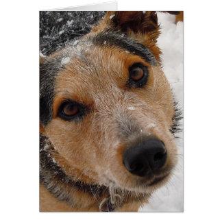Obtention du diplôme canine de félicitations de carte de vœux